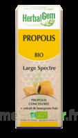 Herbalgem Propolis Large Spectre Solution Buvable Bio Fl Cpte-gttes/15ml à TOURS