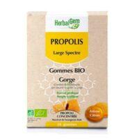 Herbalgem Propolis Large Spectre Gomme Bio B/24 à TOURS